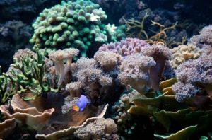 aquariam